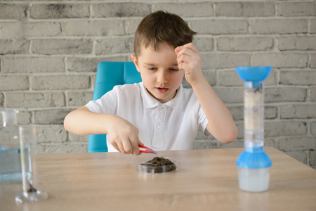 6 year old: Little 6 year old boy examines the acidity of the soil at home