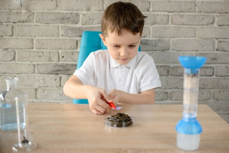 6 year old: Little 6 year old boy examines the ph of the soil at home Stock Photo