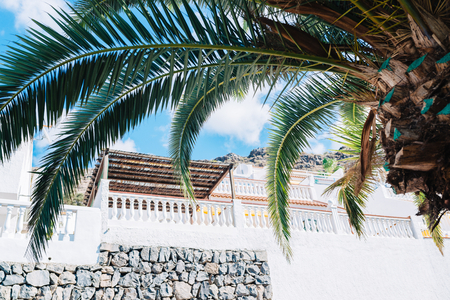 Tropical resort. Palm and hotel terrace. Tenerife. Canary Islands