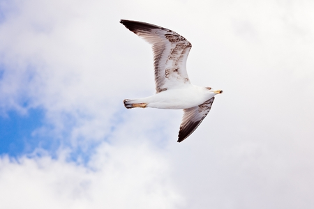 White seagull flying on blue sky. Tenerife, Canary Islands Stock Photo