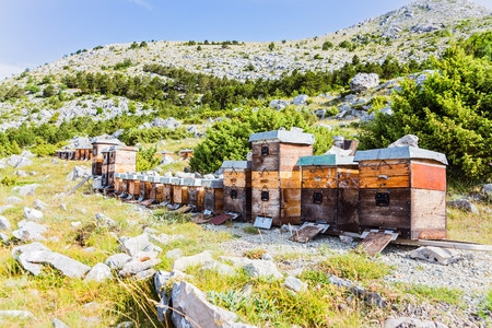 Mountain apiary in Croatian mountains. sveti Jure mountain, Biokovo, Dalmatia, Croatia