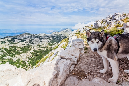 Black and white dog on the top of the mountain Stock Photo