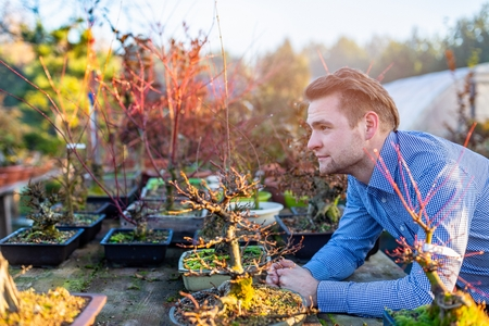 Man bonsai artist in his bonsai tree farm. Small business concept 스톡 콘텐츠