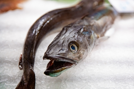 Raw fresh seafood eel fish on display in fish market Banco de Imagens
