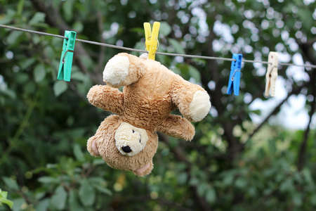wet bear: Bear drying