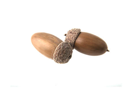 two acorns on isolated white background