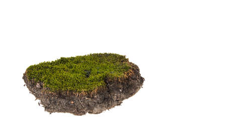 moss isolated on white background Imagens