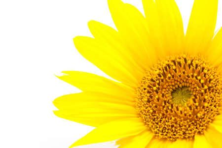 sunflower Stock Photo - 7499508