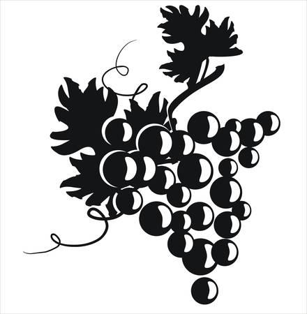 sauce: Ilustraci�n vectorial. Cl�ster de uva con hojas.  Vectores