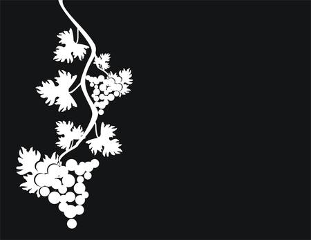 willow: Vector illustration. Grape cluster with leaves. Illustration