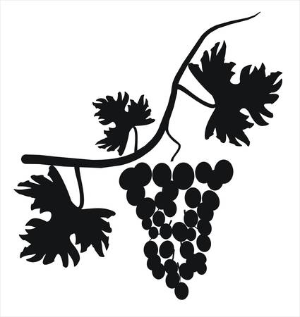 Vector illustration. Grape cluster with leaves. Vector