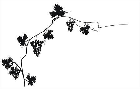 cluster: Vector illustration. Grape cluster with leaves. Illustration