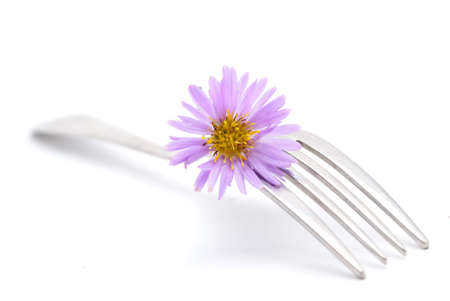 simple life: flower and fork isolated on a white background