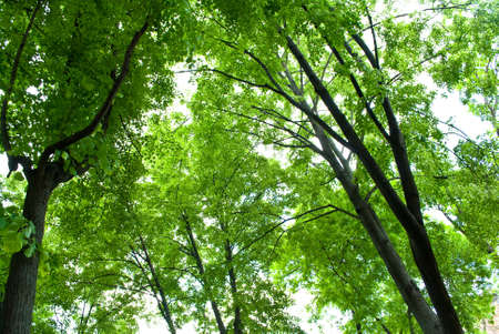 Green forest Stock Photo - 9656203