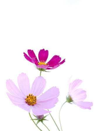 Flowers on the white background