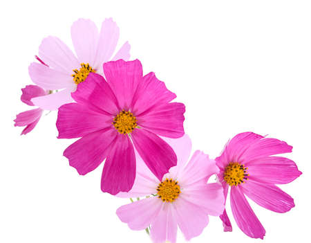 Flowers on the white background  photo