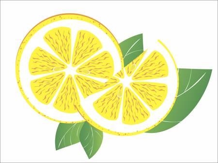 vector citrus Vector
