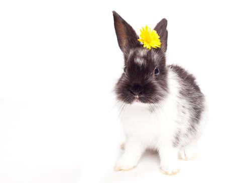 Rabbit isolated on a white background Stock Photo - 14814604