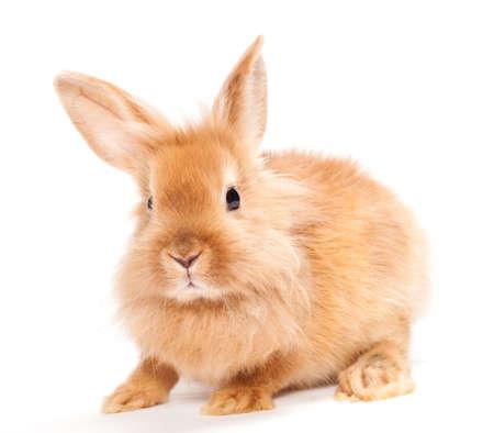 newborn animal: Rabbit isolated on a white background Stock Photo