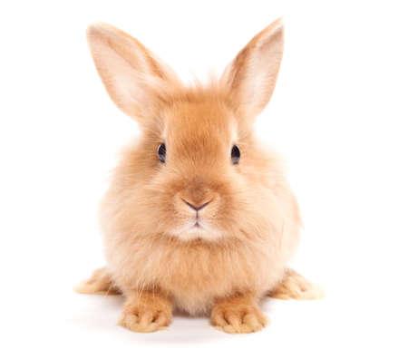 흰색 배경에 고립 된 토끼 스톡 콘텐츠