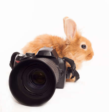 Rabbit and camera  isolated on a white background photo
