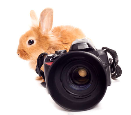Rabbit photographer  photo