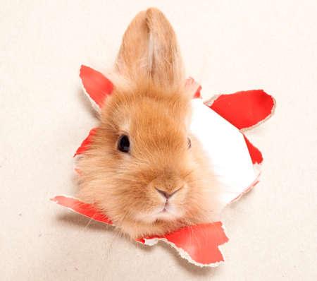 Cute Rabbit  Close-up portrait on a white background
