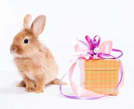 Conejo con rojo caja de regalo Foto de archivo - 14814721