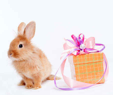 Rabbit with red giftbox photo