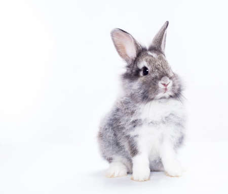 bunny rabbit: Rabbit isolated on a white background Stock Photo