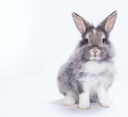 furry tail: Rabbit isolated on a white background Stock Photo