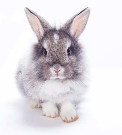 animalitos tiernos: Conejo aislado en un fondo blanco Foto de archivo