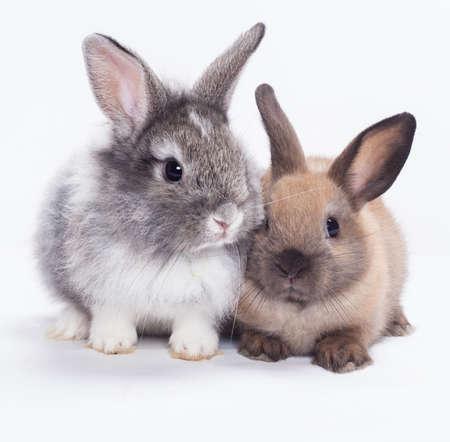 liebre: Conejito Dos conejos aislados sobre fondo blanco Foto de archivo