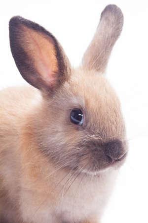 fleecy: Rabbit isolated on a white background Stock Photo