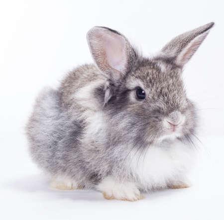 Rabbit isolated on a white background photo