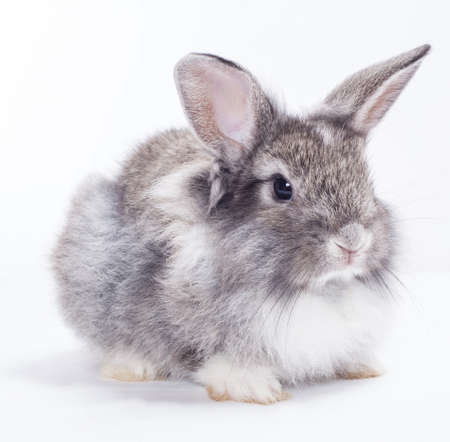 bunnies: Rabbit isolated on a white background Stock Photo