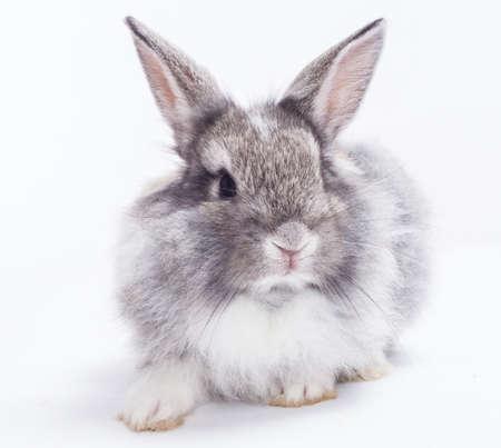 young rabbit: Lapin isolé sur un fond blanc