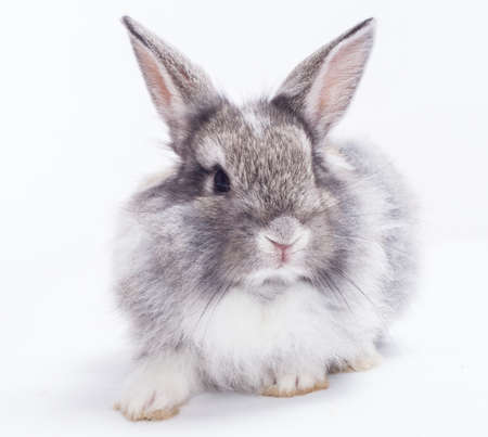 tender: Rabbit isolated on a white background Stock Photo