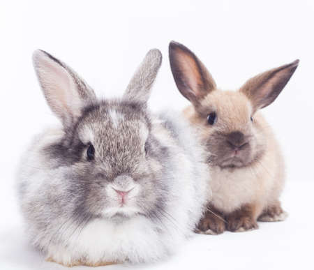 Two rabbits bunny isolated on white background Stock Photo - 15097404