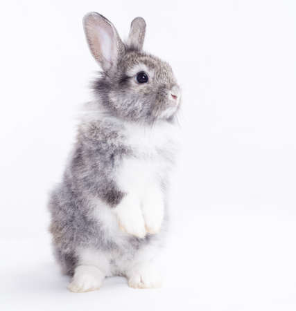 Rabbit isolated on a white background Stock fotó