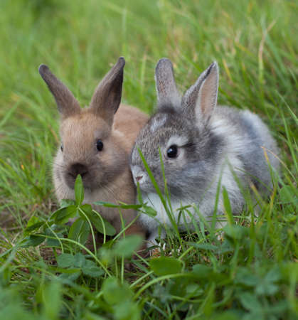 Rabbits  in grass Stock Photo