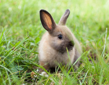 bunny rabbit: Rabbit in grass