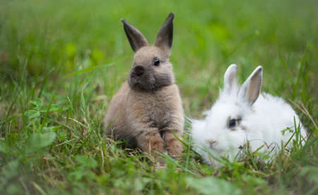 Rabbits in the grass photo