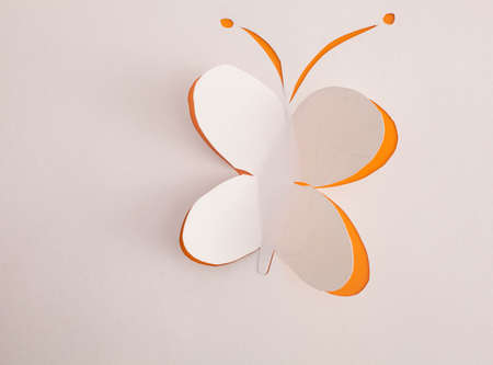 Butterfly origami photo