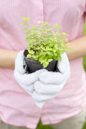 close up of hands holding plant pot photo