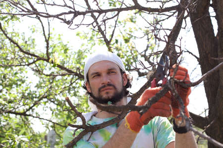secateurs: Trimming of trees with secateurs