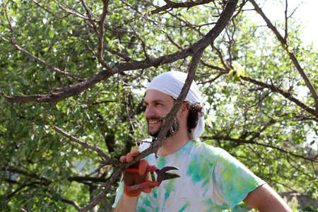 snipping: Trimming of trees with secateurs