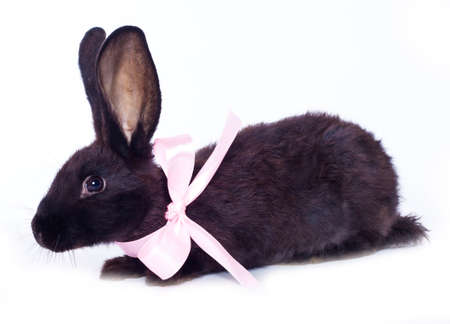 black rabbit with bow  isolated on white background  photo