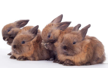 Four bunny rabbits cuddling together isolated on the white.