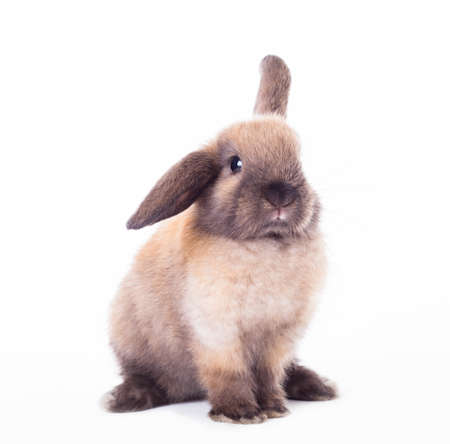 bunny ears: Rabbit isolated on a white background Stock Photo